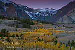 Dawn, Aspen, Populus Tremula, Parker Bench, John Muir Wilderness, Inyo National Forest, Eastern Sierra, California