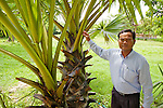 Nhim Chantheng With Palm Tree Showing Sharp Edges Used By The Khmer Rouge To Kill People, Choeung Ek