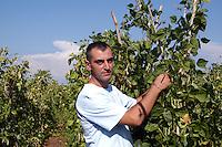 Fabio Salmistrano, il proprietario.The Owner.La Bagnara. Azienda agricola per la produzione di fagioli biologici. Raccolta di fagioli di Sutri. La Bagnara. Farm for the production of organic beans.Farmers during the harvesting of Sutri beans. ....