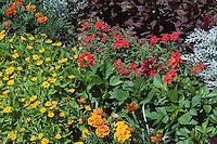Annuals in the garden: Marigold, Strawflower, Dusty Miller, Dahlia mixture