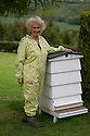 """27/05/16<br /> <br /> Gloria Havenhand.<br /> <br /> Thanks to an abundance of late-flowering blossoms in bee-keeper Gloria Havenhand's orchard, it's looking like this year could be the best ever for production for the UK's only medical honey farm, set close to the Chatsworth estate on the edge of the Derbyshire Peak District.<br /> <br /> There is a definite buzz of excitement as 72-year-old Gloria and her son Giles check the honey production in one of the several hundred hives she farms in Derbyshire and the Scottish highlands.<br /> <br /> Throughout the year, the bees collect pollen and nectar from more than 240 different varieties of flowering plants and hedgerows on the farms, with several acres of wild flower meadows nearby, which have been designated as Sites of Special Scientific Interest (SSSI).<br /> <br /> """"It's a bit like Fortnum and Masons for bees round here,"""" Gloria explained. <br /> <br /> """"The bees start the season early, usually in February, with snowdrops and crocus, before moving on to the dandelions and wild flowers such as borage and phacelia.<br /> <br /> """"Right now it's all about the orchard blossoms, and there's plenty of different ones for them to chose from, hawthorn, plum, cherry, damsons and crab apples to mention just a few.<br /> <br /> """"And later on in the year they'll move onto enjoy a feast of resins from the Christmas tree farm we also run here.""""<br /> <br /> Each hive is home to more than 40,000 bees and will produce around 120lb of honey a year, and it's this honey, which is carefully and slowly cold pressed from the wax honeycombs to keep the antibacterial properties intact.<br /> <br /> But it's not just honey that the bees provide. <br /> <br /> Gloria also harvests propolis, a resinous mixture that bees collect from tree buds, and pollen, which her company, MediBee, uses to create a range of medicinal supplements and creams, to treat a variety of ailments including eczema, psoriasis, hay fever and open wounds. <br /> <br /> """