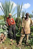 TANZANIA, Tanga, Korogwe, Mazinde Estate, owned by Mohammed Enterprises Tanzania Limited (METL) a large Sisal plantation, farm worker harvest sisal leaves which natural fibers are used for ropes carpets matts etc./ TANSANIA, Korogwe, Mazinde Estate von Mohammed Enterprises Tanzania Limited (METL), grosse Sisal-Agaven Plantage, Landarbeiter ernten die schwertfoermigen Sisalblaetter, Sisalfasern werden fuer Taue, Seile, Matten, Teppiche u.a. verwendet