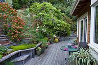 Hillside cottage garden with drought tolerant flowering shrubs and perennials in backyard with deck; Diana Magor Garden