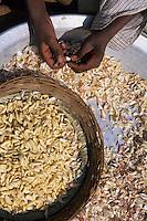 "Asie/Inde/Rajasthan/Udaipur : Restaurant ""Apani Dhani"", un homme épluche les oignons"