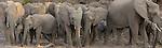 African elephant (Loxodonta africana), Mashatu, Botswana