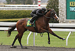 April 03, 2014: Hip 69 Sky Mesa - Alfonsina consigned by Sequel Bloodstock worked 1/8 in 09:2.  Candice Chavez/ESW/CSM