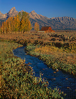 749450341 the john moulton homesteaders barn stands nex to fall colored aspens populus tremuloides and a flowing stream below the teton range in grand tetons national park wyoming