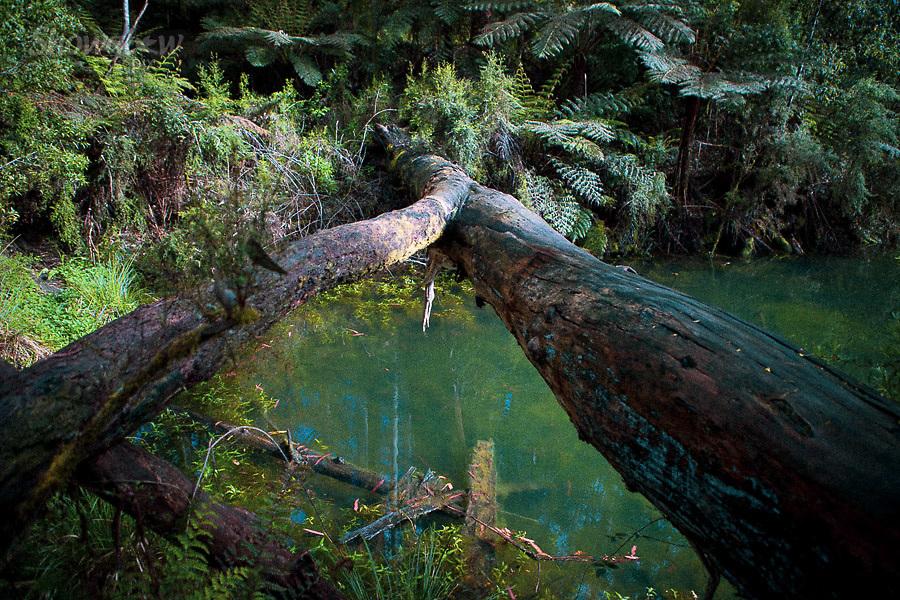 Image Ref: CA578<br /> Location: Lake Elizabeth, Forrest<br /> Date of Shot: 20.10.18