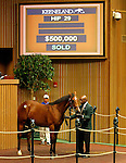 September 14, 2015: Hip 29 War Front - Wild Poppy colt consigned by Denali Stud.  Candice Chavez/ESW/CSM