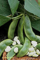 HS30-025b  Bean - lima bean - Fordhook variety