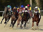 TAMPA, FL - February 10: Flameaway, #2, and Jose Lezcano take the rail through the final turn in the Sam F Davis Stakes (Grade III) at Tampa Bay Downs on February 10, 2018 in Tampa, FL. (Photo by Taylor Gross/Eclipse Sportswire/Getty Images.)