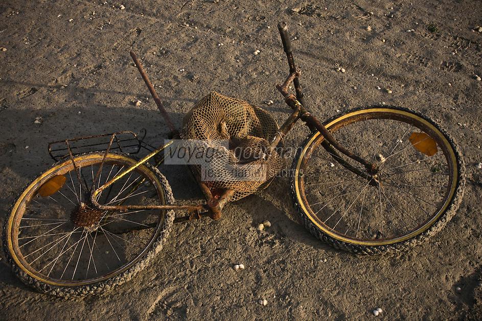 Europe/France/Picardie/80/Somme/Baie de Somme/Le Hourdel: ramassge des coques de La Baie de Somme, à la Pointe du Hourdel -vélo des ramasseusr pour porter les sacs de coques