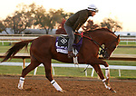 Mr Freeze, trained by trainer Dale L. Romans, exercises in preparation for the Breeders' Cup Dirt Mile at Keeneland Racetrack in Lexington, Kentucky on November 3, 2020.