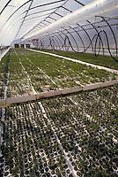 Silviculture greenhouse. British Columbia Canada.