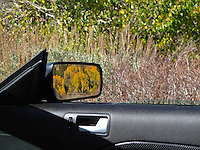 Fall colors fill the rear view mirror driving through Stanislaus National Forest.