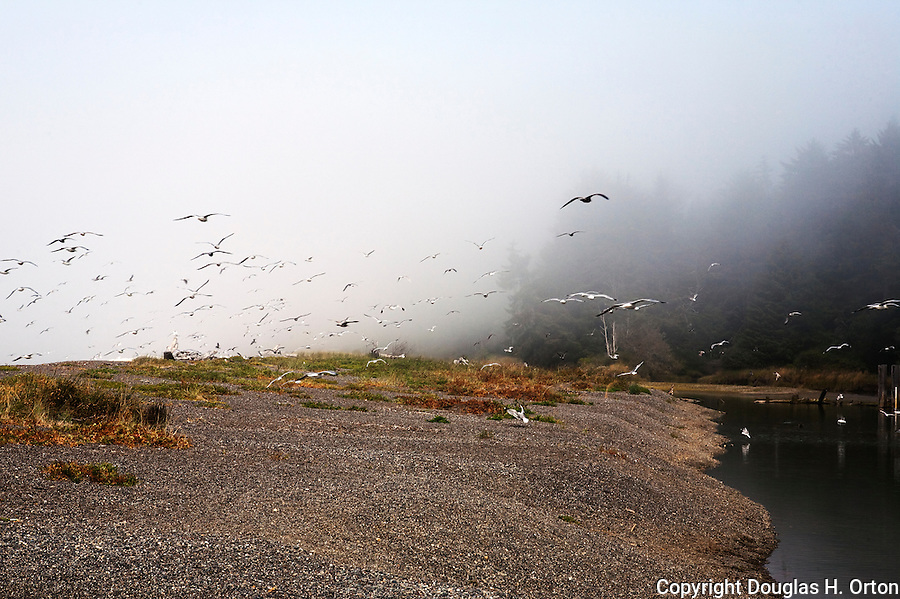 Clallam Bay, near the west end of the Strait of Juan de Fuca and the fishing community of Sekiu. Olympic Penninsula, Washington.  Outdoor Adventure. Olympic Peninsula