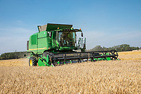 Harvesting spring barley,- Lincolnshire; September