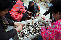 Locals gut fish in the Zhalong Wetlands, Heilongjiang Province. China. 2011