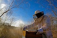 Trabalho em apicultura. Quixeramobim. Ceara. 2007. Foto de Ubirajara Machado.