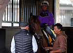 October 25, 2015:  Beholder, trained by Richard Mandella, and owned by B. Wayne Hughes, cross entered in the Breeder's Cup Classic Grade 1 $5,000,000, and the Breeder's Cup Distaff $2,000,000.  Candice Chavez/ESW/CSM