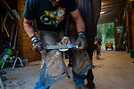 John Malmquist, farrier, works on Solo, a ten year old Thoroughbred. Cochecton, New York.  08/23/2019. Photo by Thierry Gourjon.