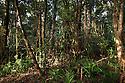 Lowland rainforest. Masoala Peninsula National Park, north east Madagascar.