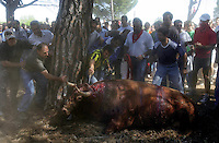 A man goes for the final thrust to kill a bull during the bull of the plain 'Toro de la Vega' festival, 13 September 2005. The festival is one of the oldest in Spain with roots dating back to the fifteenth century. The bull has to be enticed across the river from the village to the plain 'Vega' before it can be killed to honour the 'Virgen de la Pena'. (c) Pedro ARMESTRE