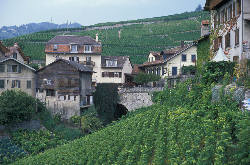 AJ1977, vineyard, Switzerland, Lavaux, Vaud, Europe, The picturesque village of Epesses surrounded by vineyards in the Canton of Vaud.