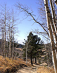 A narrow mountain road cutting through the historic Central City, Colorado mining cemetery in the Rocky Mountains.