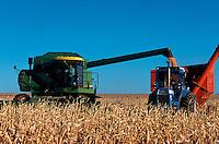 Harvesting corn.