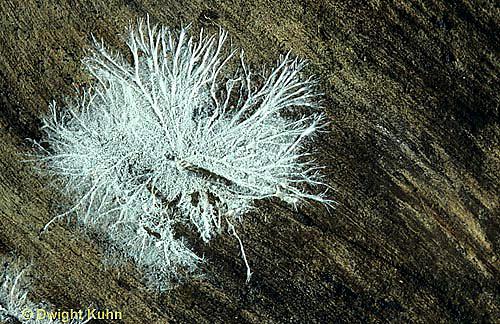 DC19-009g  Mushroom - mycelium hyphae fungus