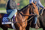 OCT 28 2014:Goldencents, trained by Leandro Mora, exercises in preparation for the Breeders' Cup Dirt Mile at Santa Anita Race Course in Arcadia, California on October 28, 2014. Kazushi Ishida/ESW/CSM