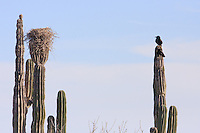 America,Mexico,Baja California,Laguna San Ignacio