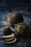 Gastronomie générale/ Diététique/  Nutrithérapie: Radis Noir Bio  - Dépuratif  //  General gastronomy / Diet / Nutritherapy: Organic Black Radish - Depurative