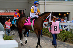 February 21, 2015: Forever Unbridled with Brian J Hernandez Jr up in the Rachel Alexandra Stakes at the New Orleans Fairgrounds Risen Star Stakes Day. Steve Dalmado/ESW/CSM