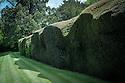 The main yew hedge, Rousham House.
