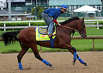April 20, 2015 Kentucky Derby and Oaks contenders at Churchill Downs.  American Pharoah galloped with exercise rider Georgie Alvarez at Churchill Downs. Owner Zayat Stables, trainer Bob Baffert.  Pioneerof The Nile x Littleprincessemma (Yankee Gentleman) ©Mary M. Meek/ESW/CSM