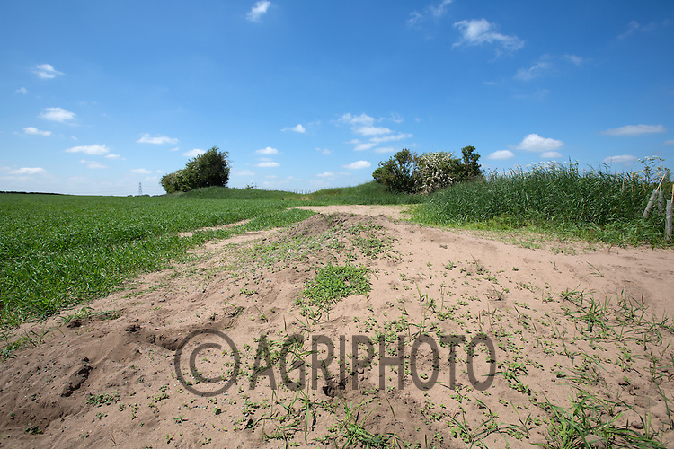 Light sandy soil blowing into drifts in Nottinghamshire<br /> Picture Tim Scrivener 07850 303986<br /> tim@agriphoto.com<br /> ?.covering agriculture in the UK?.