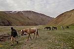Snow Leopard (Panthera uncia) biologist, Khalil Karimov, and ranger, Ulan Toktosunov, gathering Domestic Horses (Equus caballus), Besh Moinok, Tien Shan Mountains, eastern Kyrgyzstan