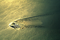 Deutschland, Nordsee, Sandbank, Gold, Wasser, Wellen