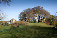 Budding dafodils signal the coming of spring to Lochinch Castle