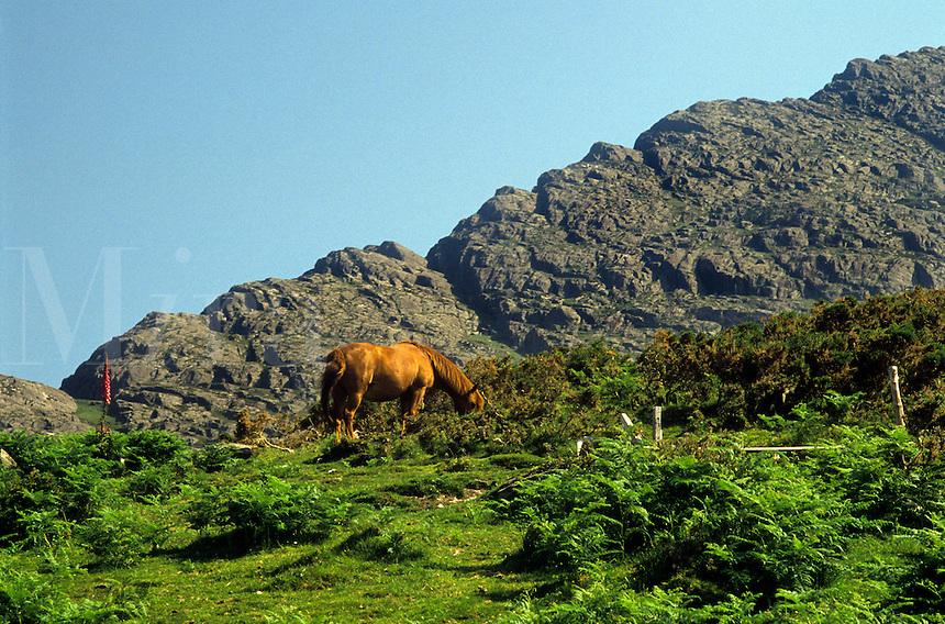 Horse grazing in the Burren hills, County Clare, Ireland