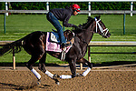 APRIL 27, 2015: Eskenformoney, trained by Todd Pletcher, exercises in preparation for the 141st Kentucky Oaks  at Churchill Downs in Louisville, Kentucky. Jon Durr/ESW/Cal Sport Media