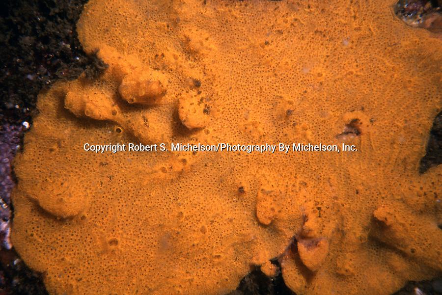 crumb of bread sponge, orange color phase