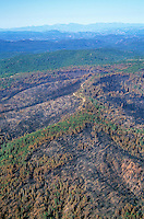 Aerial of the aftermath of Rodeo-Chediski Forest Fire showing mosaic pattern of burn, Apache-Sitgreaves National Forest, Arizona, AGPix_0367.