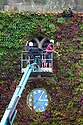 08/09/16<br /> <br /> Time for an Indian summer trim - estate workers, Aiden Linton and Sam Harrison give the virginia creeper its annual trim on the old parish church at Okeover, near Ashbourne, in the Derbyshire Peak district. All this year's new growth is pruned to protect the church's stonework and to stop the 14th century building disappearing altogether.<br />   <br /> All Rights Reserved, F Stop Press Ltd. +44 (0)1773 550665