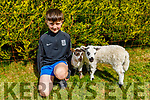 Donagh Lenihan with his pet lambs Cutlets and Chop at his home in Boolteens on Friday.