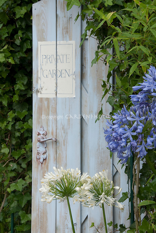 Blue Agapanthus, white agapanthus, blue garden door painted sign saying Private Garden . Board and batten door