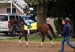 LOUISVILLE, KY - APRIL 20: My Man Sam (Trappe Shot x Lauren Byrd, by Arch) leaves the track after exercising at Churchill Downs, Louisville KY, followed by his trainer Chad C. Brown. Owner Sheep Pond Partners, Newport Stables LLC, Jay W. Bligh. (Photo by Mary M. Meek/Eclipse Sportswire/Getty Images)