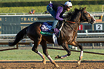 ARCADIA, CA  OCTOBER 30:  Breeders' Cup Turf entrant Bricks and Mortar, trained by Chad C. Brown,  exercises in preparation for the Breeders' Cup World Championships at Santa Anita Park in Arcadia, California on October 30, 2019. (Photo by Casey Phillips/Eclipse Sportswire/CSM)